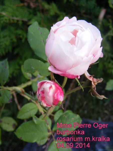 Mme.Pierre Oger