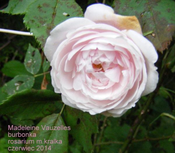 Madeleine de Vauzelles