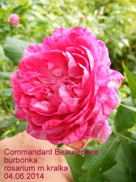Commandant Beaurepaire