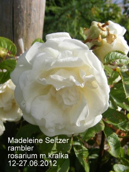 Madeleine Seltzer