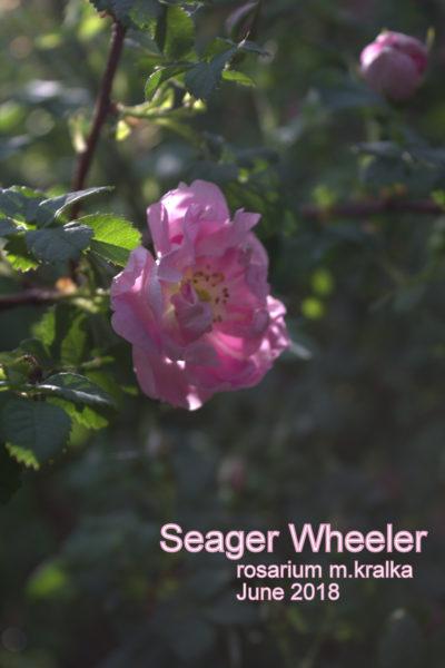 Seager Wheeler