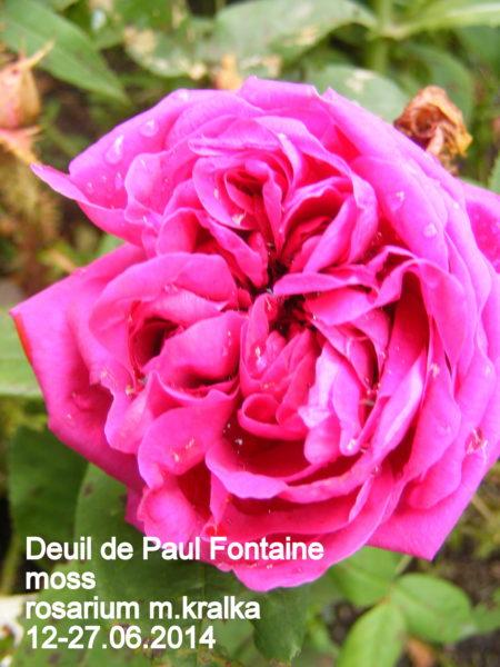 Deuil de Paul Fontaine