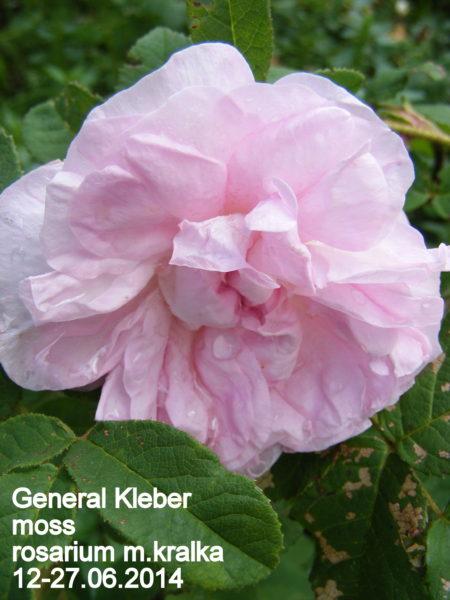 General Kleber